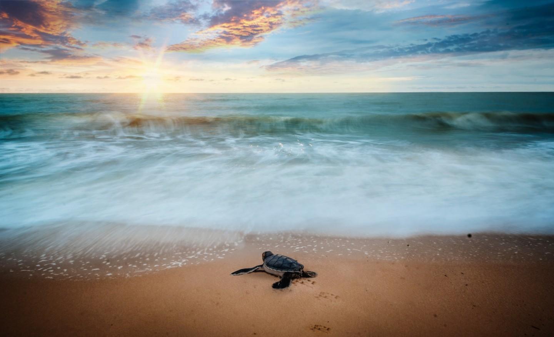 plage tortue